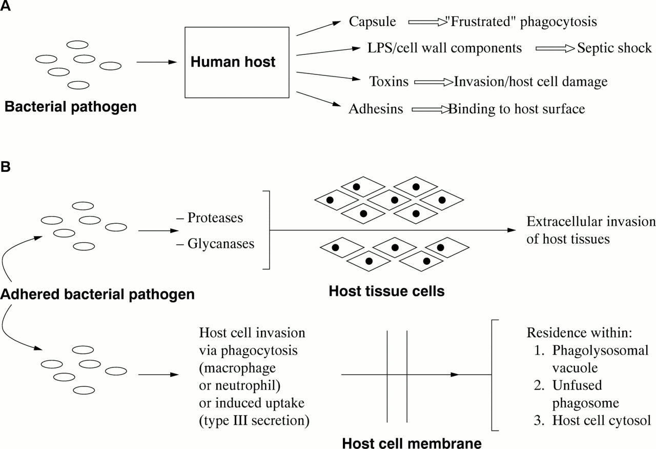 Mechanisms Of Bacterial Pathogenicity Postgraduate Medical Journal Bacteria Can Have Appendages With Specific Functions Download Figure
