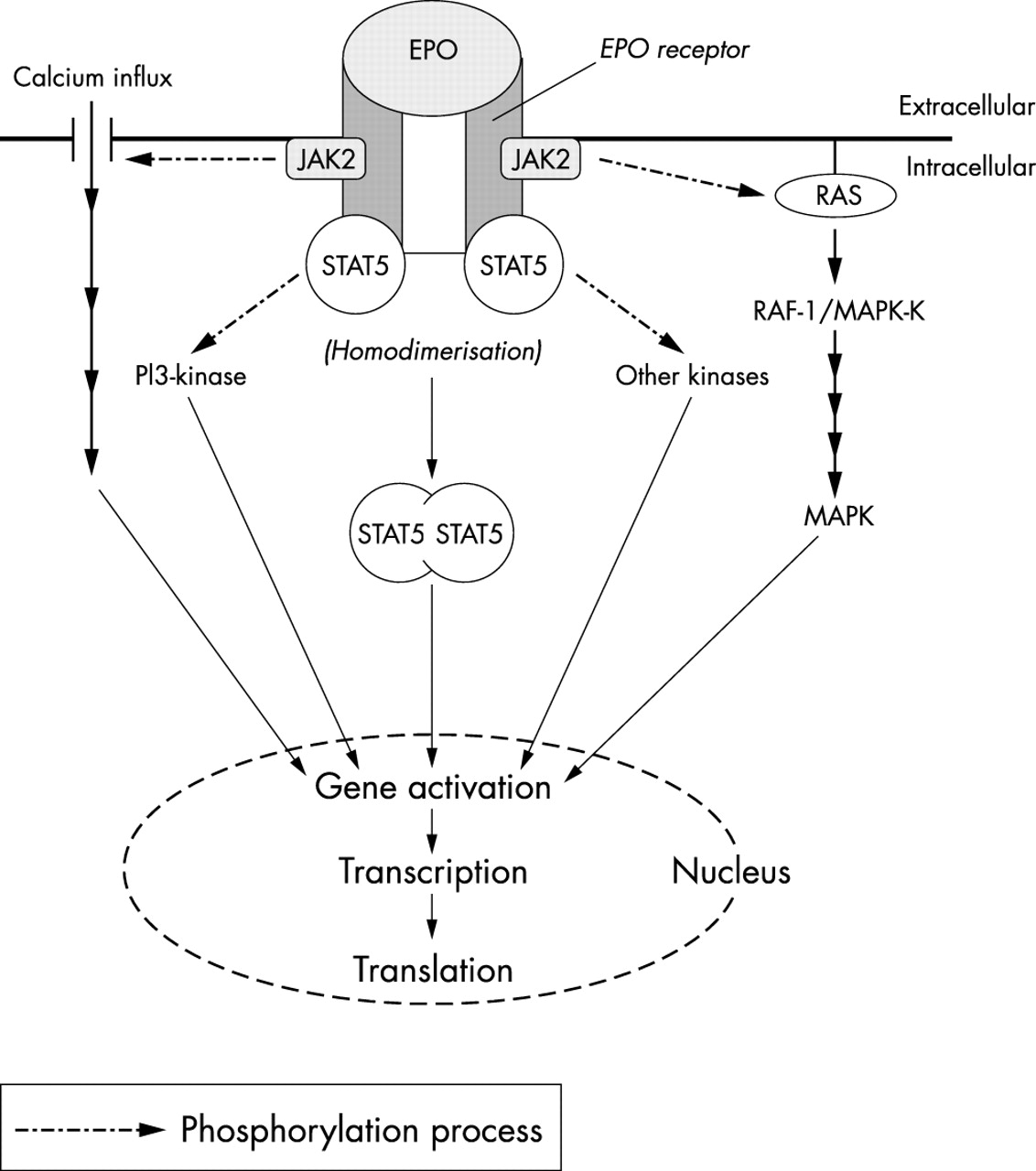 Recombinant Erythropoietin In Clinical Practice Postgraduate 2000 Yamaha 50 Hp 4 Stroke Wiring Diagram Download Figure