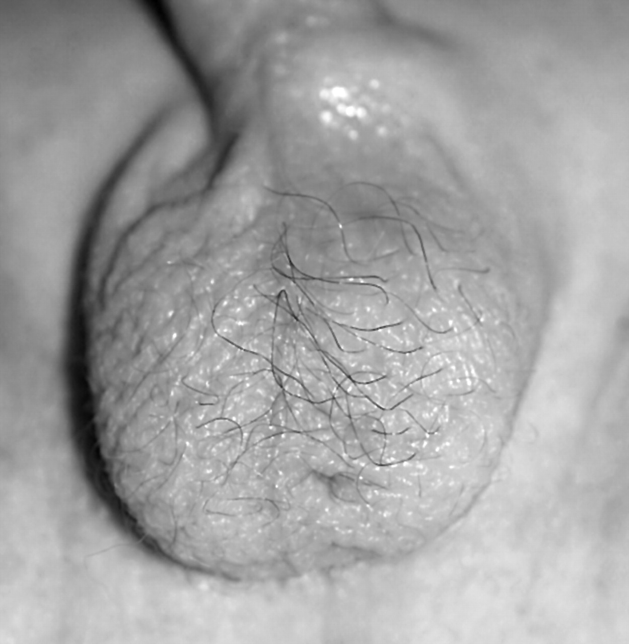 Gray pubic hair pictures