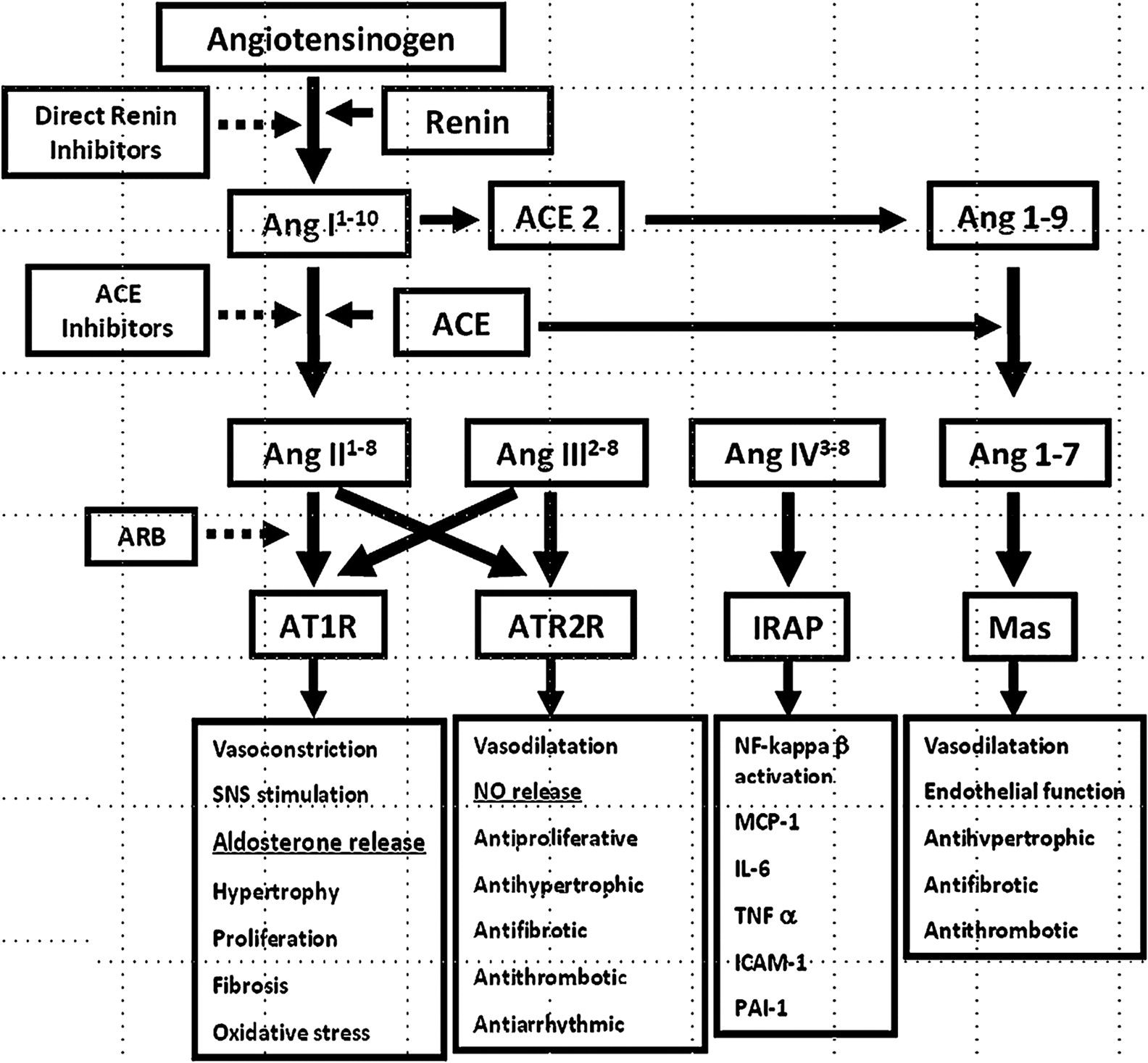 Renin–angiotensin system antagonists in the perioperative